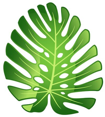 monstera: Leaf tropical plant - Monstera. Vector illustration. Illustration