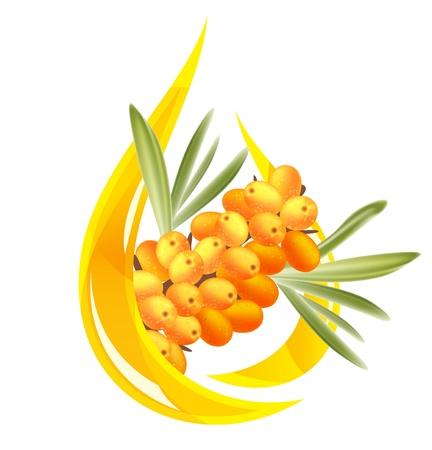 sea green: Sea buckthorn oil. Stylized drop of oil and a branch with berries. Illustration