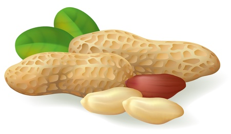 nut shell: Peanut fruit and leaves. illustration on white background.