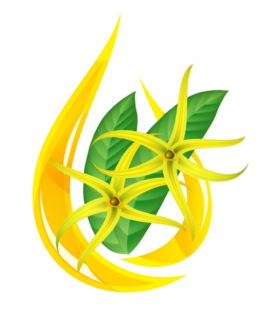 essential oil: Essential oil of ylang-ylang. Stylized drop.  illustration on white background.