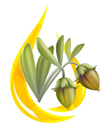 dermatology: Jojoba oil. Stylized drop. illustration on white background.