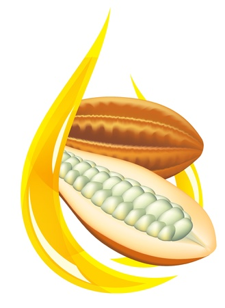 cocoa fruit: Cocoa butter. Stylized drop illustration on white background. Illustration