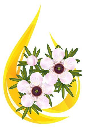 Manuka or Tea tree or just Leptospermum. Stylized drop of essential oil illustration. Illustration