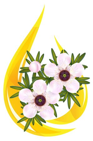 essential: Manuka or Tea tree or just Leptospermum. Stylized drop of essential oil illustration. Illustration