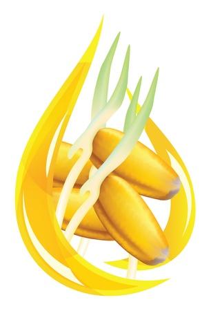 germinaci�n: Aceite de germen de trigo. Ilustraci�n de drop estilizada sobre fondo blanco.