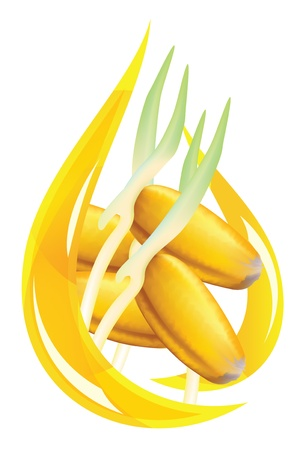 Wheat germ oil. Stylized drop illustration on white background.