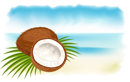 coconut leaf: Ripe coconuts, sea and beach.