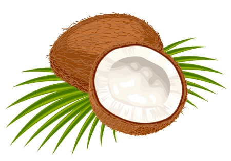 Coconut with leaves on a white background.  Illustration