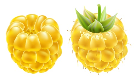 Yellow ripe raspberries on a white background. Stock Vector - 10424085