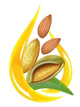 almonds: Almond oil. Stylized drop.  Illustration