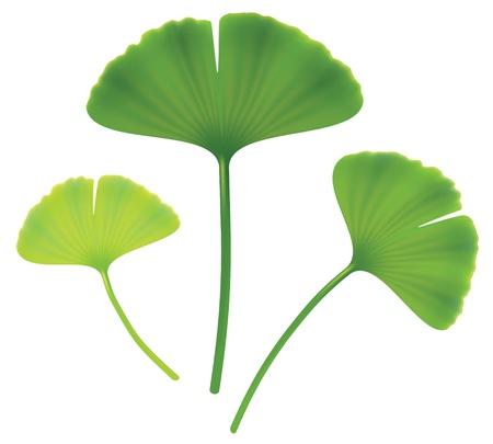homeopathic: Leaves of ginkgo biloba.