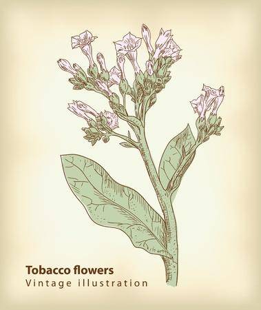 tobacco plant: Tobacco flowers.