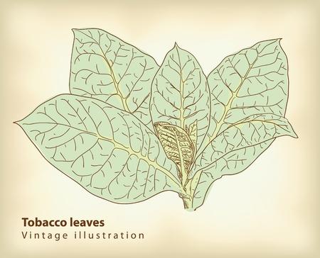 Tabaksbladeren. Vector Illustratie