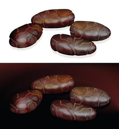 Kakaobohnen. Vektor-Illustration auf weißem und dunklem Hintergrund.
