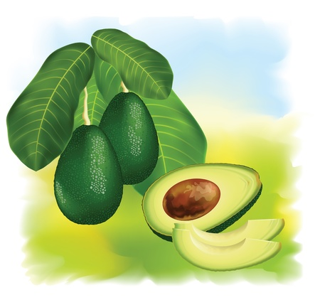 vegetable fat: Avocados on a branch with leaves. Half of the fruit with cloves. Vector illustration.