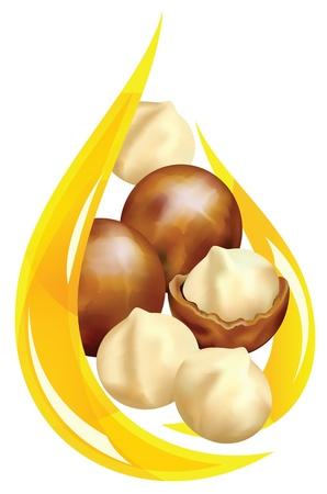 El aceite de macadamia. Caída estilizada. Ilustración vectorial sobre fondo blanco.
