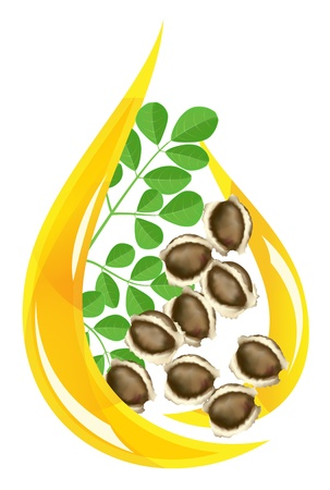Moringa oleifera oil. Stylized drop. Vector illustration on white background.