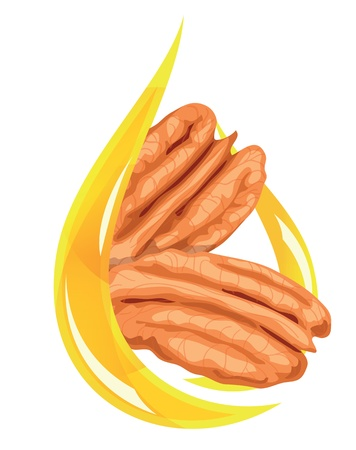 whole pecans: Pecan oil. Stylized drop. Vector illustration.