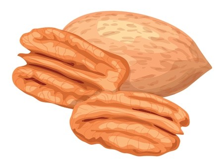Pecan nuts isolaterd on white background.