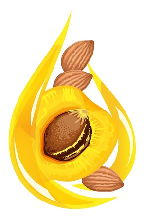 apricot kernel: Apricot kernel oil. Stylized drop. Vector illustration. Illustration