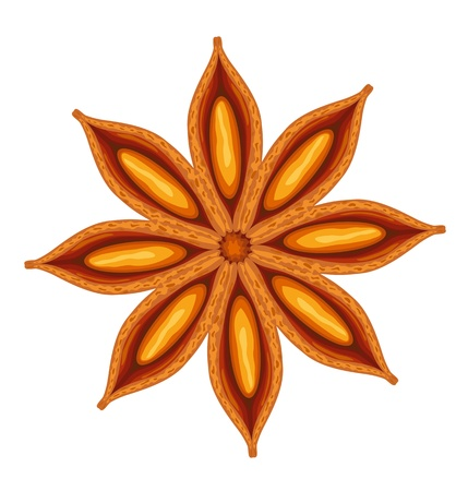 indian spices: Anise. Vector illustration.