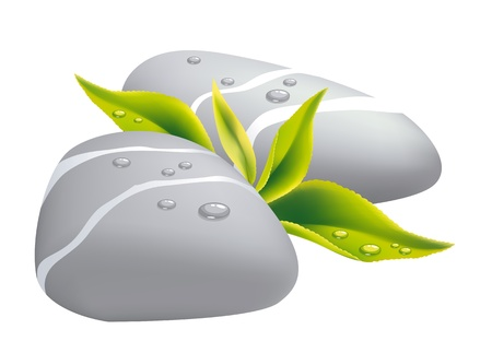 pebbles: Two grey pebbles with fresh leaf. Vector illustration.