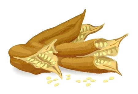 sesame seeds: Sesame pods. Vector illustration.