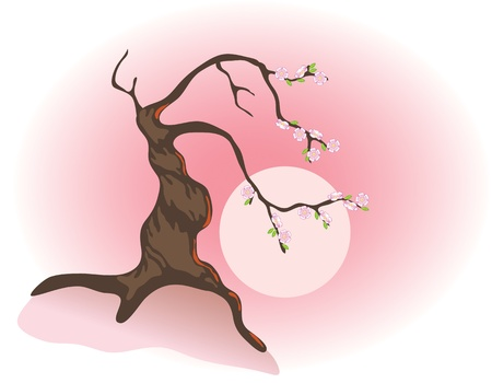 cherry wood: Flowering bonsai and the morning sun. Vector illustration