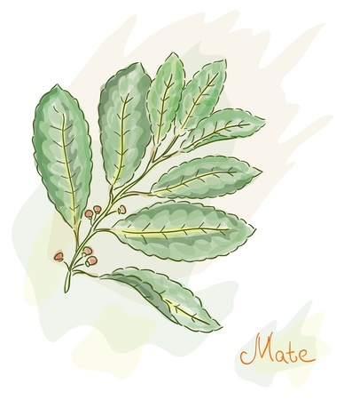 mate drink: Yerba Mate. Watercolor style. Vector illustration.
