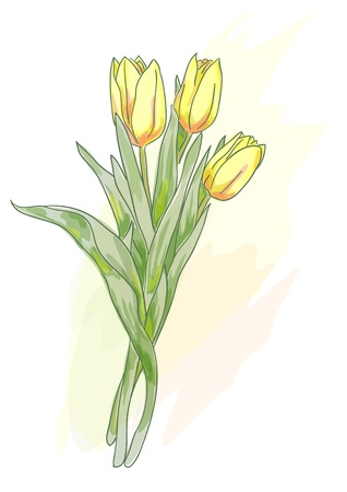 Bouquet of yellow tulips. Watercolor style. Vector illustration. Vector
