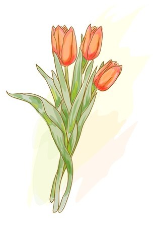 Bouquet of red tulips. Watercolor style. Vector illustration. Vector