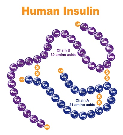 synthesis: Human Insulin. Stylized chemical structure.