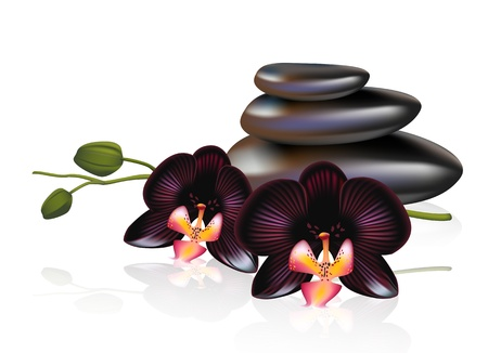 meditation stones: Pebbles with black orchids. Spa composition. Vector illustration.