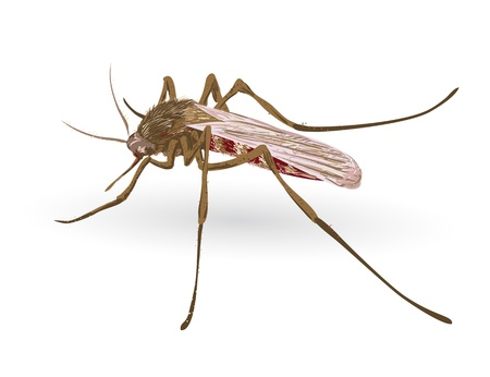 infect: Mosquito. Vector illustration.