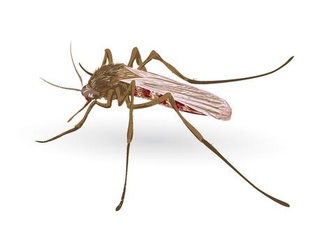 malaria: Mosquito. Векторные иллюстрации.