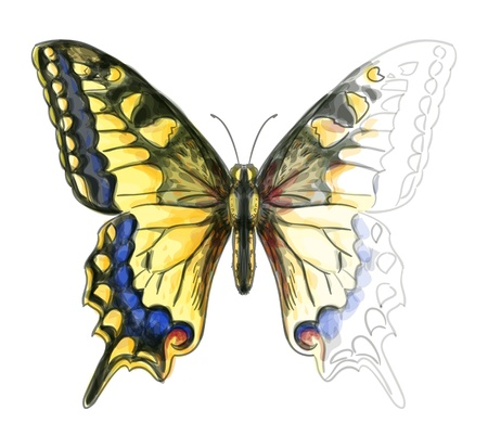 one animal: Butterfly Papillo Machaon. Unfinished Watercolor drawing imitation.
