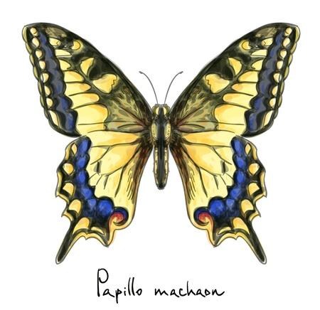 papillon dessin: Papillon Machaon Papillo imitation Aquarelle
