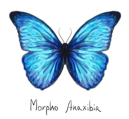 mariposa azul: Mariposa Morpho Anaxibia imitación de la acuarela