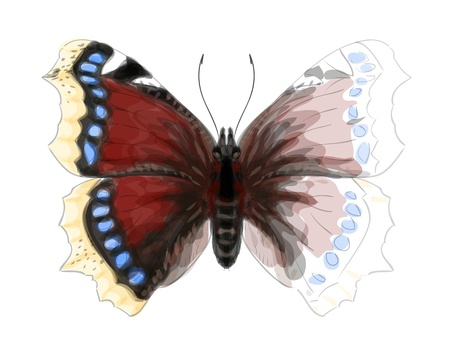 Butterfly Numphalis Antiopa  Unfinished Watercolor drawing imitation Vector