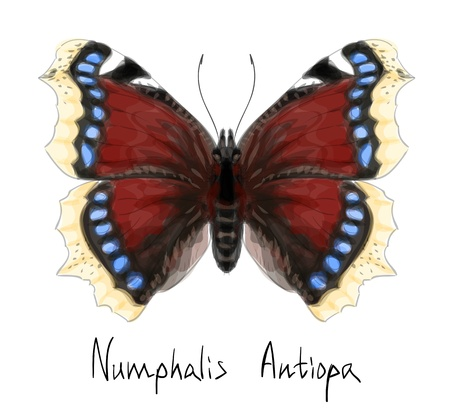 Butterfly Numphalis Antiopa  Watercolor imitation Stock Vector - 13951330