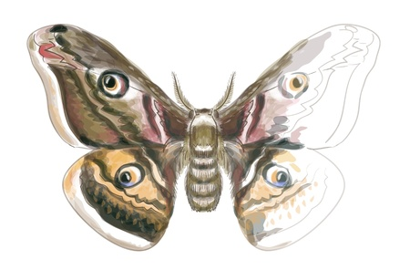 butterfly isolated: Butterfly Saturnia Pavonia  Unfinished Watercolor drawing imitation