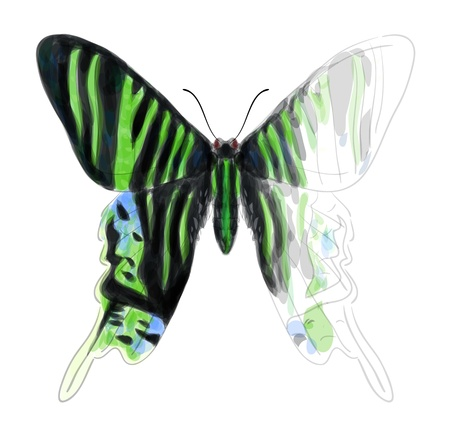 blue spotted: Butterfly Urania Leilus  Unfinished Watercolor drawing imitation Illustration