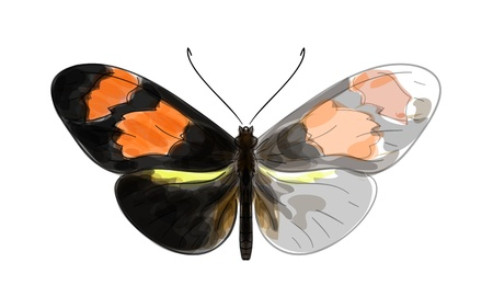 Butterfly Heliconius. Unfinished Watercolor drawing imitation Stock Vector - 15774965