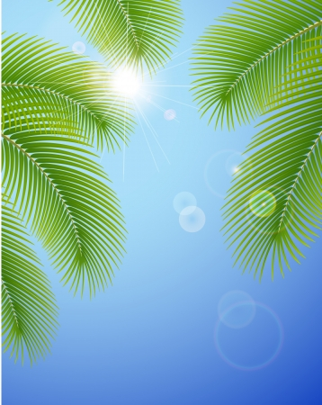Sunny blue sky and palm branches Vectores