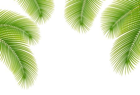 Folhas da palmeira no fundo branco Ilustração