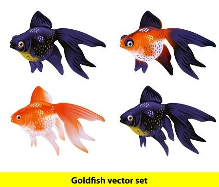 Aquarium Goldfish set Telescope and Veiltai Vector illustration