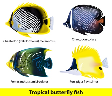 anemones: Tropical butterflyfish set  Vector illustration