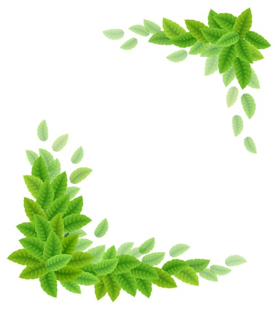 Background with green leaves  Vector illustration