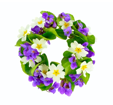 primula: Wreath of woodland violets and primula  Isolkated on white background