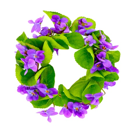 purple wreath: Wreath of woodland violets  Isolkated on white background